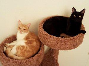 Petsmart Cat Adoption San Diego