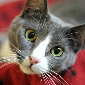 Petsmart Encinitas Cat Adoption